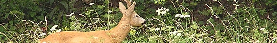deer 150